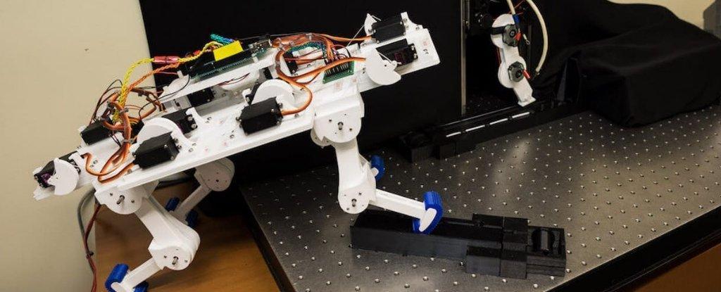 اندام روباتیکی که بدون آموزش راه می رود