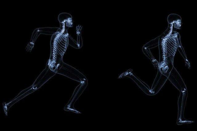 نقش هورمون استخوان در مقابله با خطرات ناگهانی