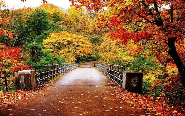 چرا هوای پاییزی بوی بی نظیری دارد؟