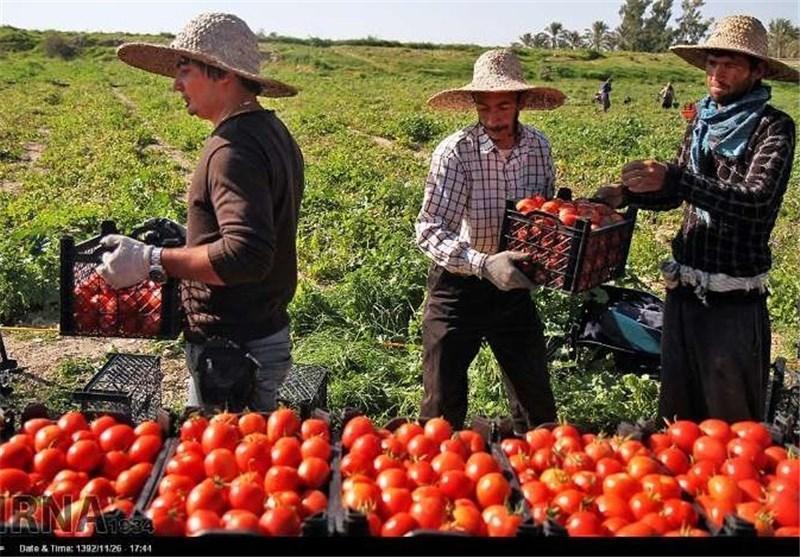حضور افاغنه در کارهای کشاورزی استان کرمان در حال افزایش است