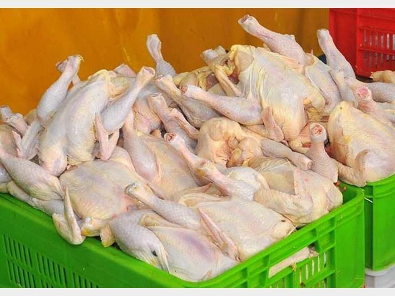 صدور مجوز واردات 45 هزار تن مرغ