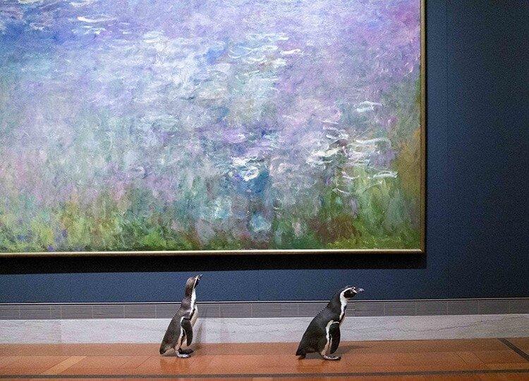 بازدید پنگوئن های باغ وحش کانزاس از یک موزه هنری ، نظر پنگوئن ها درباره نقاشی های باروک و مونه چیست؟