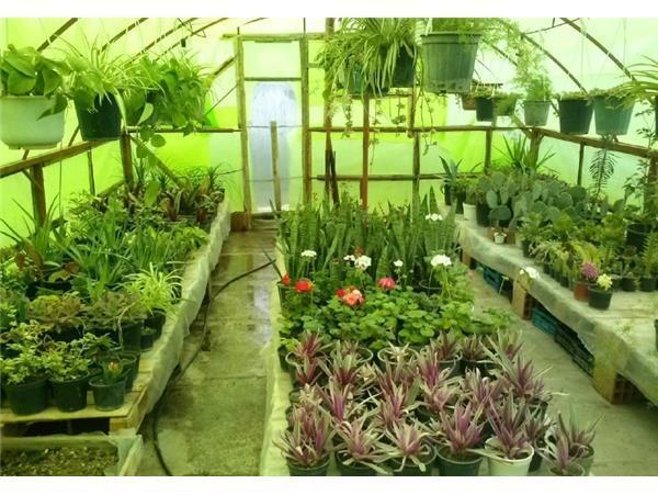 صدور 70 مجوز گلخانه به وسیله سامانه پنجره واحد در ساری