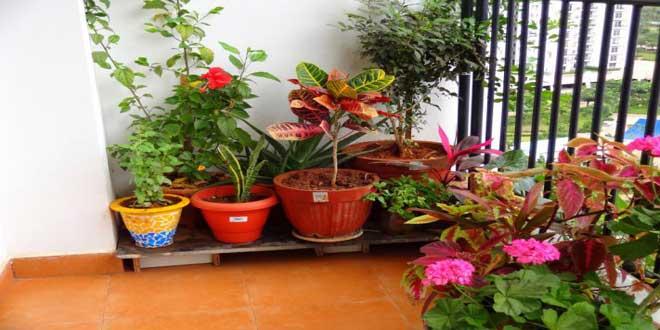 20 نکته برای نگهداری گلها در خانه