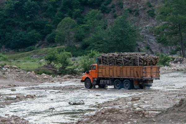 خبرنگاران قاچاق چوب آفت جنگلهای گلستان