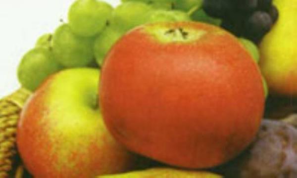 غذاهای مناسب در پیشگیری و درمان سنگ های صفراوی